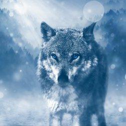 wolf-1836875__340